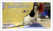 Rat Basketball