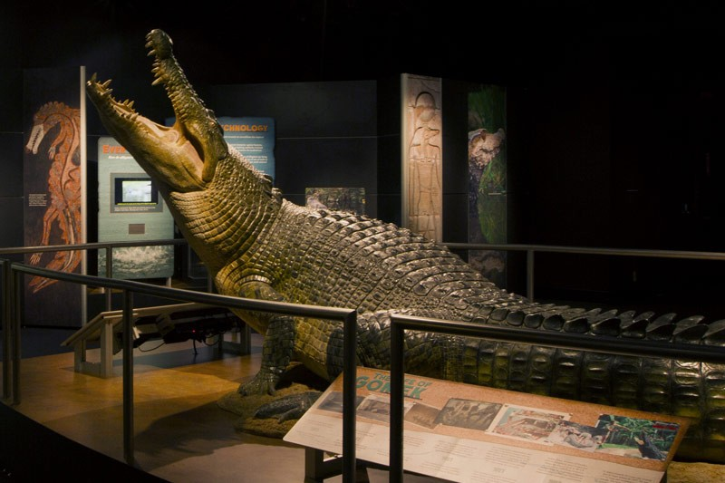 NEW CROCODILE EXHIBITION OPENS AT COSI