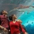 COSI Members Save $2 Off General Admission at the Newport Aquarium