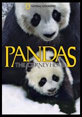 Pandas: The Journey Home (3D)